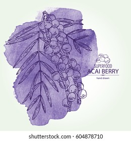 Watercolor background with acai berries. Superfood. Hand drawn