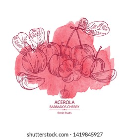 Watercolor background with acerola: fruit, leaves and acerola slice. Barbados cherry. Vector hand drawn illustration