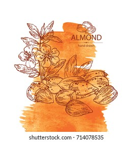 Watercolor background with almond: almond nuts, fruits, flower and leaves. Vector hand drawn illustration.