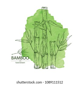 Watercolor background with bamboo: bamboo stalk and leaves. Vector hand drawn illustration.