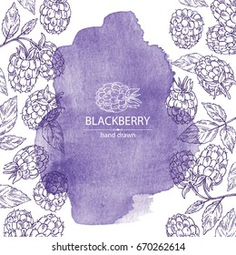 Watercolor background with blackberry: a branch of blackberry, berries, leaves. Vector hand drawn illustration.