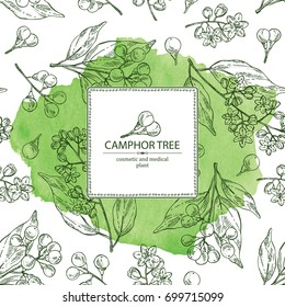 Watercolor background with camphor: branch of camphor tree, leaves, berries and camphor flowers. Perfumery, cosmetics and medical plant. Vector hand drawn illustration.
