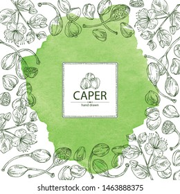 Watercolor background with caper: caper bud, pod and flower. Vector hand drawn illustration.