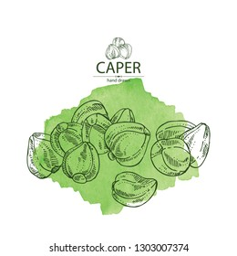 Watercolor background with caper: caper bud. Vector hand drawn illustration.
