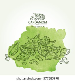 Watercolor background with cardamom. hand drawn