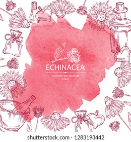 Watercolor background with echinacea: plant, leaves and echinacea flowers. Cosmetic and medical plant. Vector hand drawn illustration