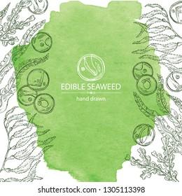 Watercolor background with edible seaweed: laminaria seaweed, macrocystis, chlorella seaweed and fucus. Brown algae. Vector hand drawn illustration
