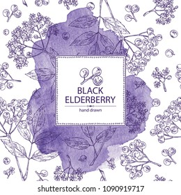 Watercolor background with elderberry black: branch of elderberry , berries, flowers and leaves. Vector hand drawn illustration.