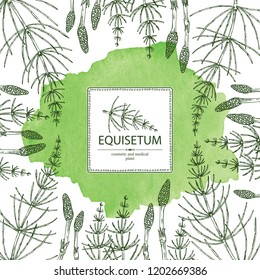 Watercolor background with equisetum: plant and escape equisetum. Horsetail. Cosmetics and medical plant. Vector hand drawn illustration.
