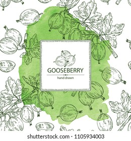 Watercolor background with gooseberry: branch of gooseberry, berries and leaves. Vector hand drawn illustration.