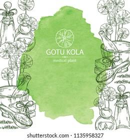 Watercolor background with gotu kola: branch of gotu kola. Centella asian. Oil, soap and bath salt . Cosmetics and medical plant. Vector hand drawn illustration