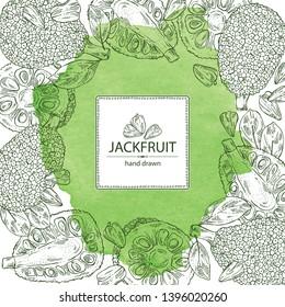 Watercolor background with jackfruit: fruit and jackfruit slice. Vector hand drawn illustration