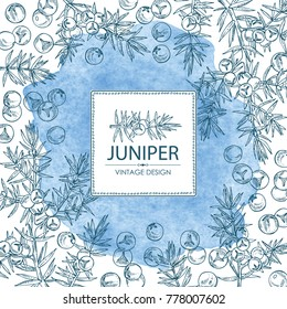 Watercolor background with juniper: berries juniper and a branch. Cosmetics and medical plant. Vector hand drawn illustration