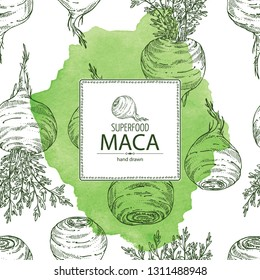 Watercolor background with  Maca Peruvian. Superfood. Vector hand drawn illustration