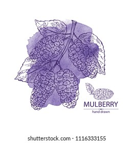 Watercolor background with mulberry: berries and leaves. Vector hand drawn illustration