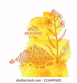 Watercolor background with mustard: plant, mustard seeds, flower, leaves and pod. Dijon mustard. Vector hand drawn illustration.