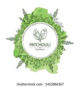 Watercolor background with patchouli: patchouli branch with leaves and flowers. Cosmetics and medical plant. Vector hand drawn illustration.