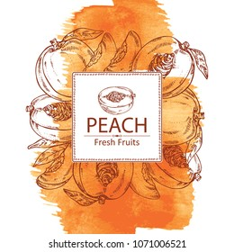 Watercolor background with peach and peach slice background. Vector hand drawn illustration