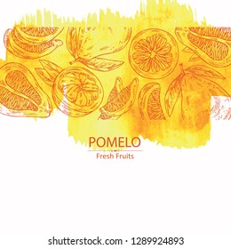 Watercolor background with  pomelo and pomelo slice. Vector hand drawn illustration