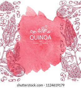 Watercolor background with quinoa: plant and quinoa seeds. Super food. Vector hand drawn illustration.