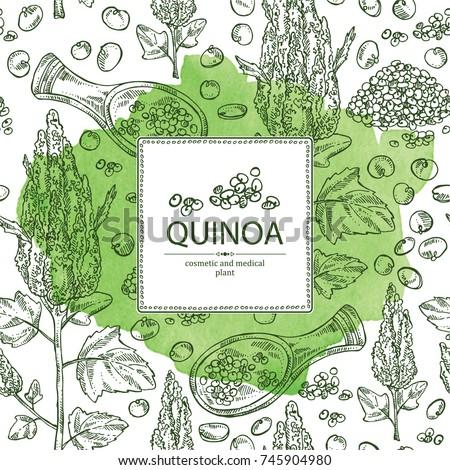 Watercolor Background Quinoa Plant Quinoa Seeds Vector de stock ...