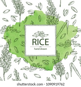 Watercolor background with rice and plant with rice. Vector hand drawn illustration.