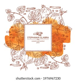 Watercolor background with stephania glabra: stephanie smooth  plant and stephanie smooth tuber. Cosmetic and medical plant. Vector hand drawn illustration