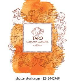 Watercolor background with taro: taro root, leaves and taro slice. Colocasia esculenta. Vector hand drawn illustration.