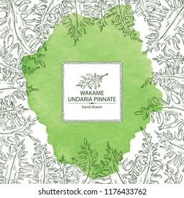 Watercolor background with wakame: undaria pinnate seaweed, wakame leaves. Brown algae. Edible seaweed. Vector hand drawn illustration.