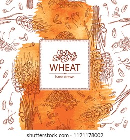 Watercolor background with wheat and wheat grain. Vector hand drawn illustration