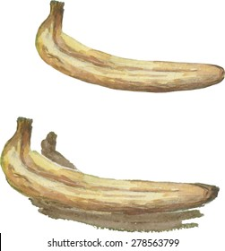 Watercolor banana illustration isolated on white background. Vector.
