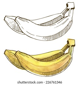 Watercolor bananas. Vector illustration with fruits painted in watercolor.
