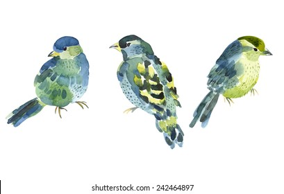 Watercolor bird collection for your design. Vector set.