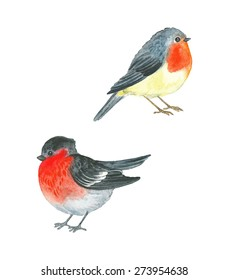 Watercolor birds Robin (Erithacus rubecula) and Bullfinch (Pyrrhula pyrrhula), vector illustration.