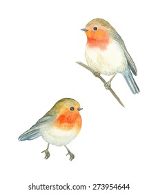 Watercolor birds Robin (Erithacus rubecula), vector illustration.