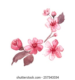 Watercolor blossom cherry tree branches. Hand drawn japanese flowers on white background. Vector illustration.