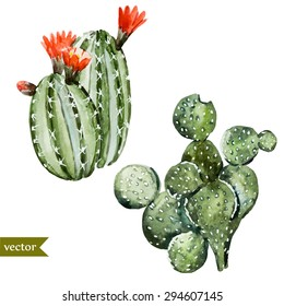 watercolor botanical illustration cactus, isolated object, tropics