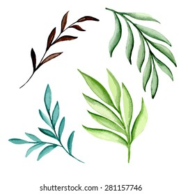 Watercolor branches. Vector illustration