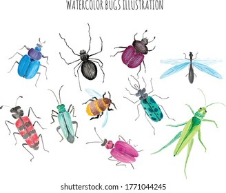 Watercolor Bugs Life Collection Set.eps