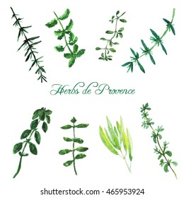 Watercolor collection of herbs de Provence. Rosemary, basil, thyme, sage, peppermint, summer savory, marjoram, oregano.