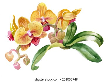 Watercolor colorful orchid flowers on white background vector