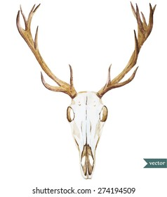 watercolor deer skull. Vector hand drawn illustration
