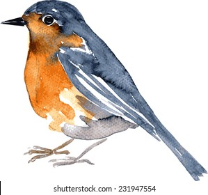 watercolor drawing bird, robin at white background, hand drawn vector illustration
