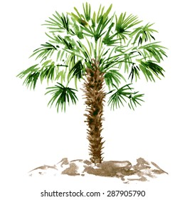 watercolor drawn palm tree, hand painting vector illustration