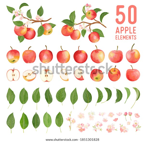 Watercolor elements of apple fruits, leaves and flowers for posters, wedding cards, summer boho banners, cover design templates, social media stories, spring wallpapers. Vector apples illustration