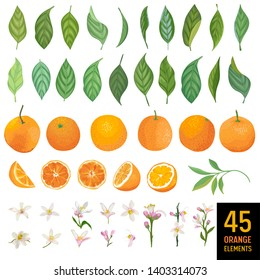 Watercolor elements of oranges, leaves and flowers for posters, citrus summer banners, design templates, spring wallpapers. Vector illustration