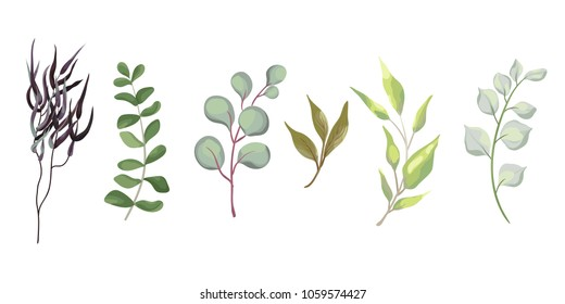 Watercolor eucalyptus set, natural plants,agonis, herbs, leaves, art foliage, greenery. Decorative design elements in rustic boho style.