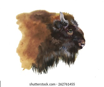 Watercolor european bison animal isolated on white background vector illustration