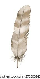 Watercolor feather on white background