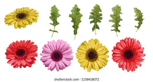 Watercolor flower gerbera and leaves elements isolated on white background, floral set, vector design for invitation, wedding, save the date, card, holiday, summer design